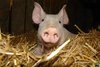 http://farm3.static.flickr.com/2501/4116940501_d59b8af3c0_m.jpg