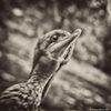 Près de 1.500 cormorans et goélands argentés ont été retrouvés morts