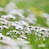 Spring -2-