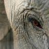Pour une interdiction TOTALE du commerce de l'ivoire pour sauver les éléphants !!!