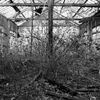 Friche industrielle - the come back of the end