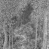 Forêt gardée de près !...