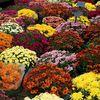 Couleurs automnales: Le marché de Nogent le Rotrou le 27 Octobre (2)