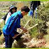 Plantation de 150 pins noirs à Thala Rana