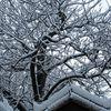 Genève en neige suite...