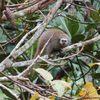 Le Conservatoire pour la Protection des Primates ouvre son site Internet