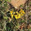 Première fleurs....