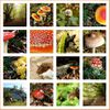 Nostalgie de champignons