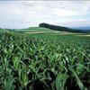 Economie Juin/Juillet 2028 - OGM LE FOL ESPOIR