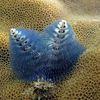 Biodiversité: nouvelles merveilles des océans.