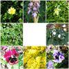 Dites-le avec des fleurs ... de mon jardin en février