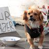 Le petit chien de la rue Royale