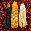 Monsanto condamné au Brésil (Argentine et France même combat)