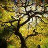 Recommandations Fédérales pour une bonne pratique de la grimpe d'arbres
