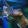 Octopussy, la pieuvre qui sourit