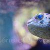 Mon ami de l'aquarium