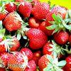 Le plein de rouge... sirop à la fraise