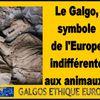 L'Espagne épinglée par la Commission européenne pour sa maltraitance animale