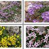 Flore des montagnes (Cantabrie)