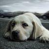 POUR UNE CLASSIFICATION DES PEINES EN MATIÈRE DE DROIT DES ANIMAUX !!! LES CRIMES ET LES ACTES DE BARBARIE DOIVENT ÊTRE PUNIS ET SÉVÈREMENT !!!