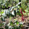 Herbier du Chili