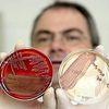 La bactérie mortelle résiste à la traque des scientifiques
