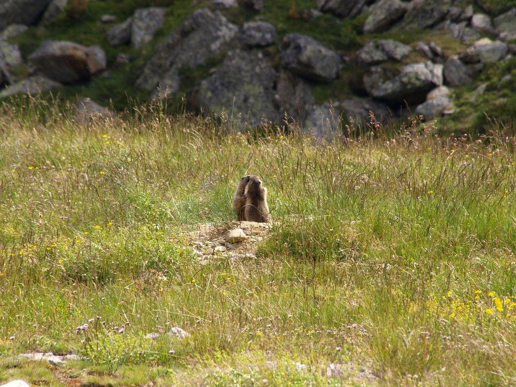 Album - Marmottes-2009