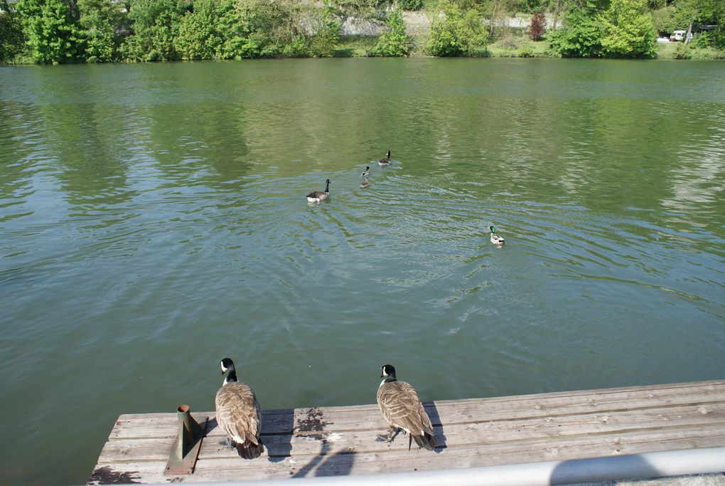 Profondeville, Bord de Meuse, Campagne, Lac de Bambois, ...