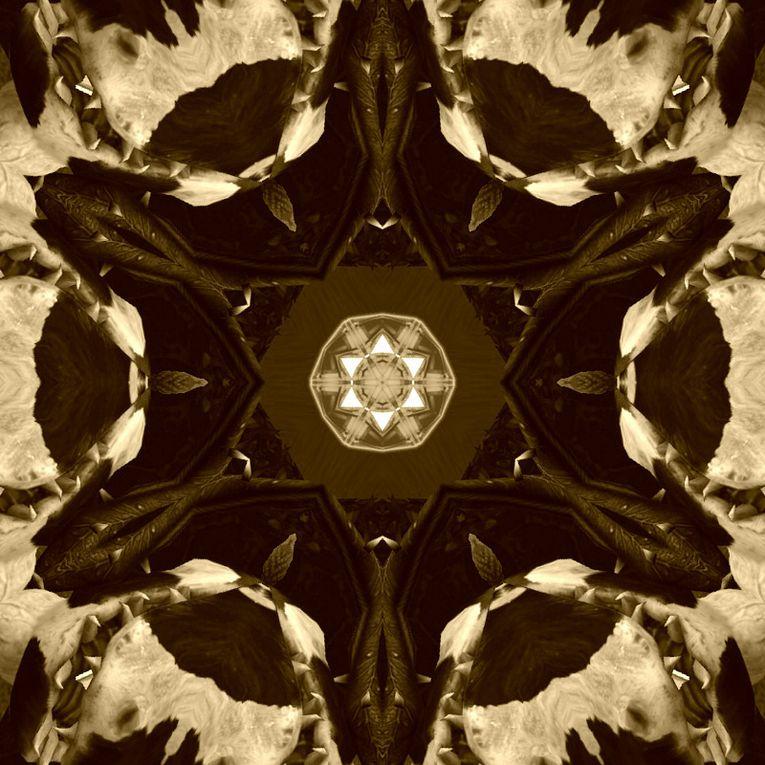 Album - Sims 3 - Mandalas et Kaléïdoscopes 15