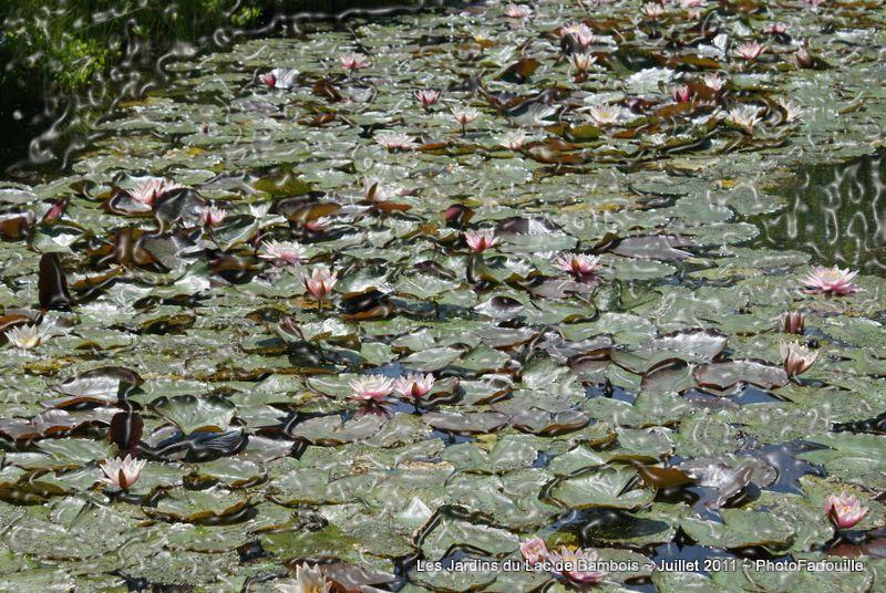 Album - Variations Plastique sur Lac de Bambois