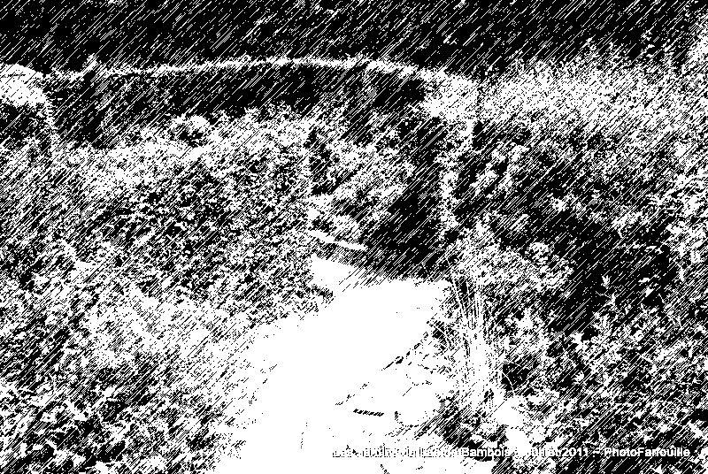 Album - Variations Plume sur Lac de Bambois