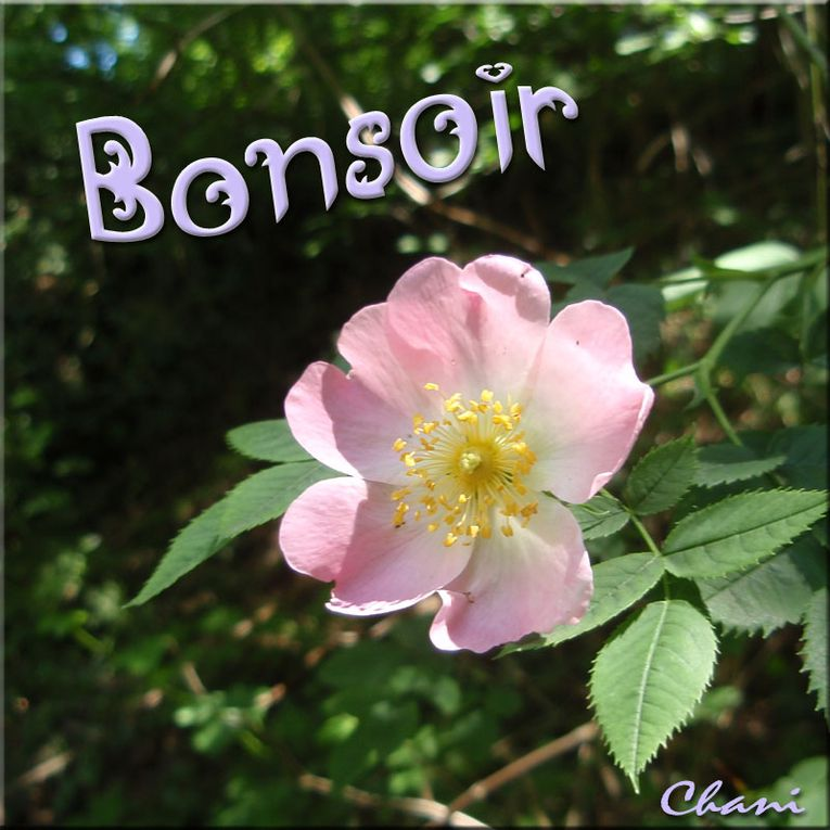Album - Cartes à message 2