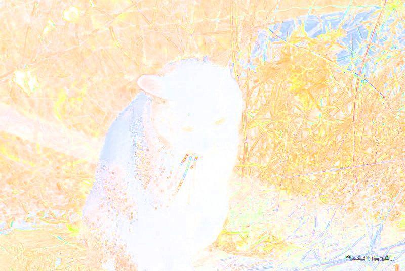 Album - chachacha 2