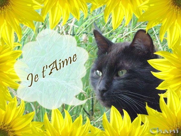 Album - Petits mots du chat noir