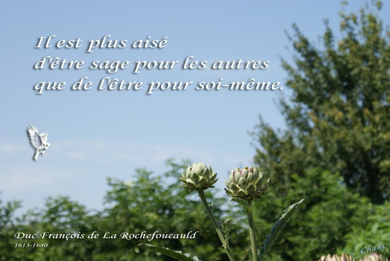 Album - Cartes de Citations