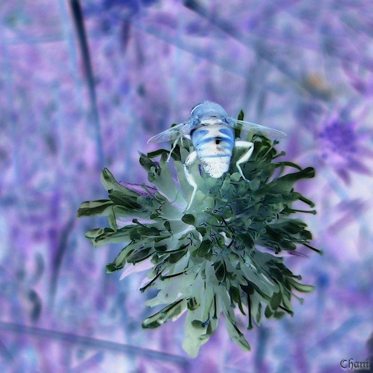Album - Dans le Jardin de Chani ~ 1