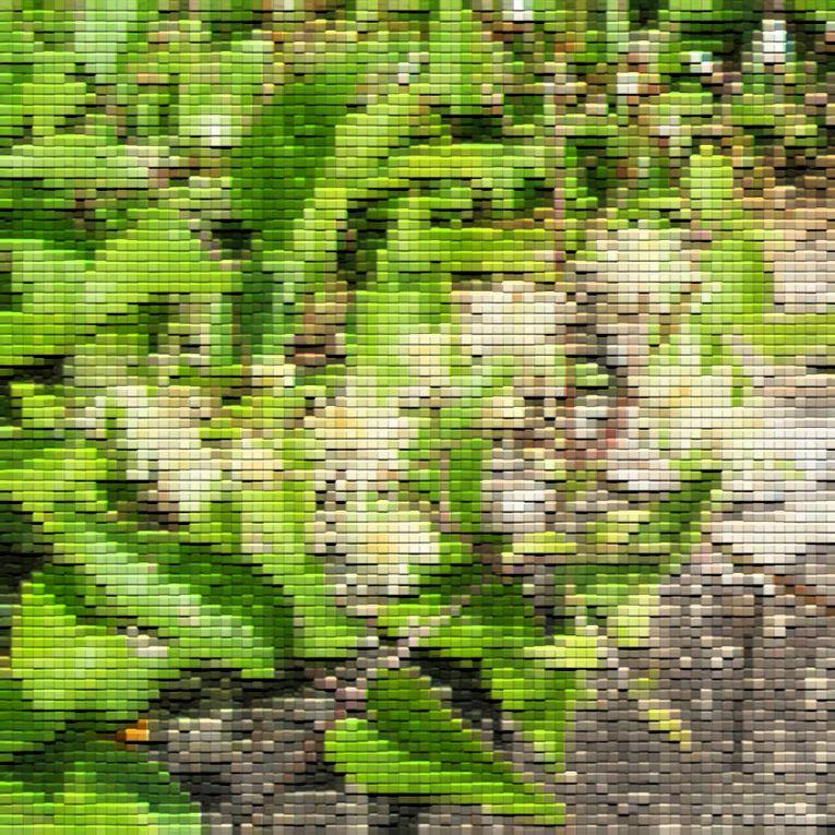 Album - Dans le Jardin ~ Variations