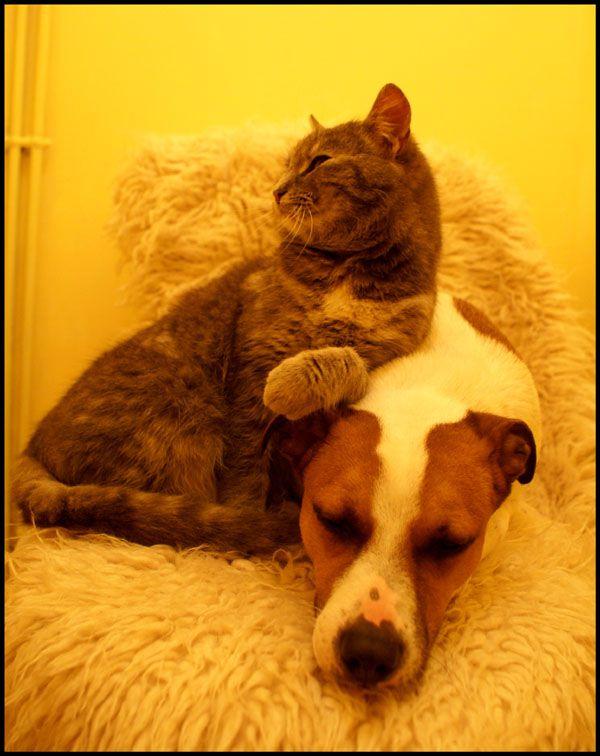 © *٭* .Mister.Cat. *٭* - NOUVEAU : le blog de Mister Cat : http://mistercat.over-blog.fr/ - NE PAS UTILISER CES PHOTOS SANS AUTORISATION PREALABLE DE L'AUTEUR SVP - MERCI