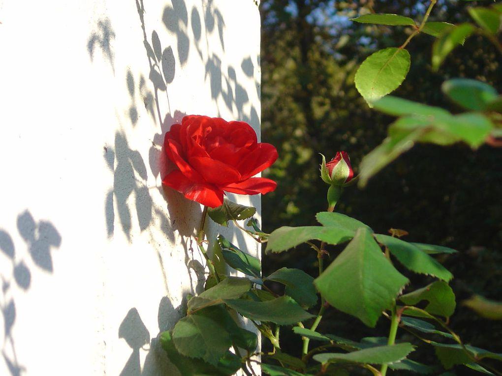 Album - Photos de Fleurs