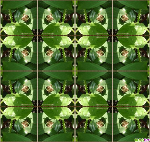 Album - Kaleidoscopes - miroirs 1