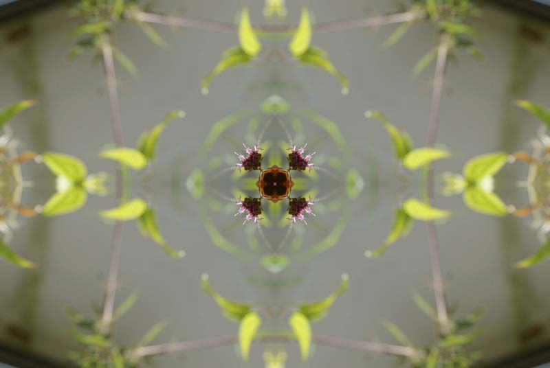 Album - Mandalas &amp&#x3B; Kaleidoscopes 64