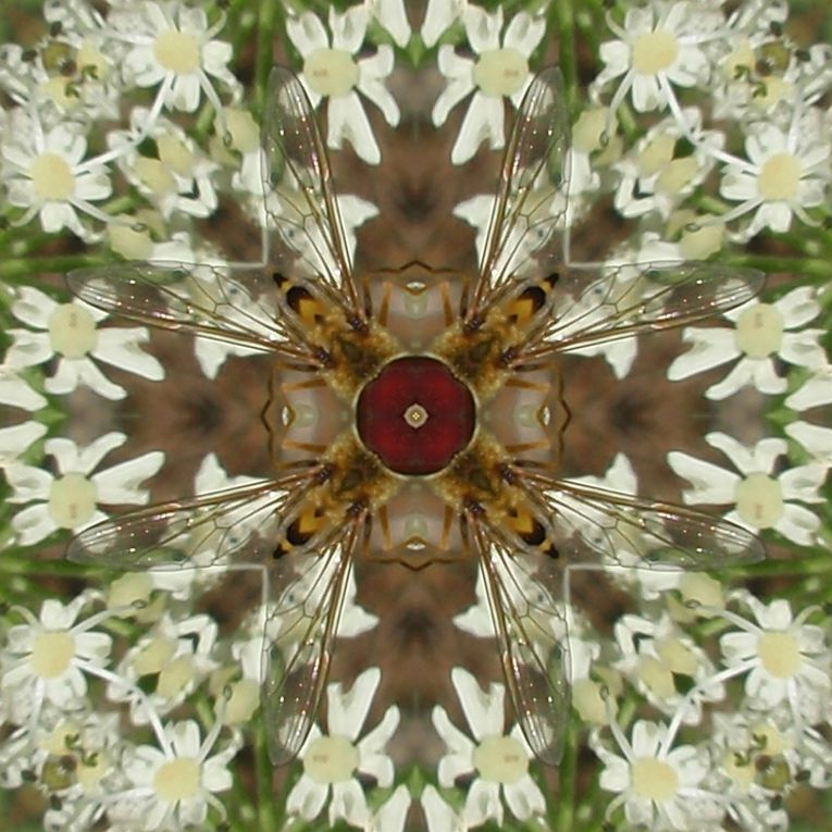 Album - Mandalas &amp&#x3B; Kaleidoscopes 75