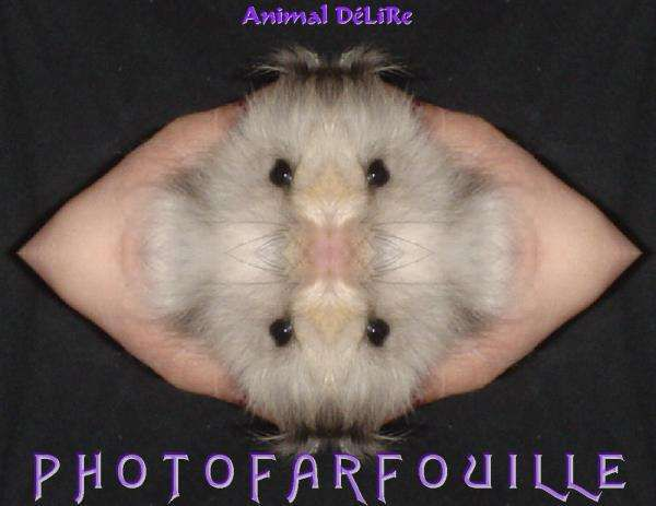 Album - Animaux en folie