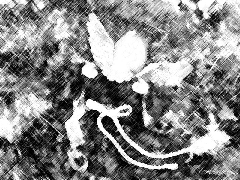 Album - Noël 2010 ~ 30