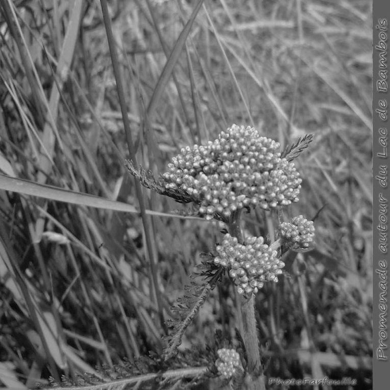 Album - Noir et Blanc