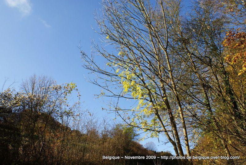 Campagne et Bois de Belgique