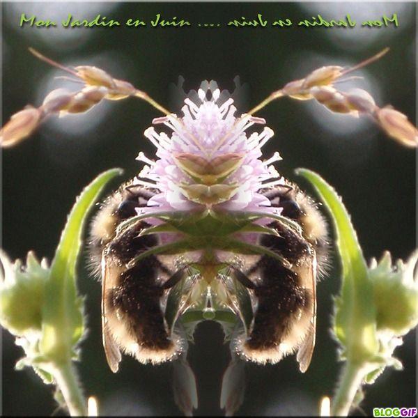 Album - Divers 4