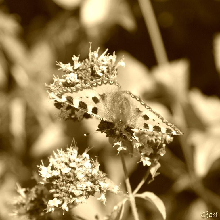 Album - Sepia