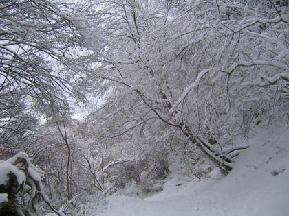 <P>Il venait de vraiment bien neigé...<BR>Le temps froid laissait présager une piste de descente fort sympatique... dur et rebondie... pour tout dire carrément verglacée... </P><P>&nbsp&#x3B;</P><P>Le chemin de la montée fût donc notre descente -en luge - préférée en cette fin janvier &#x3B;-)</P><P>&nbsp&#x3B;</P><P>Royal !!</P>