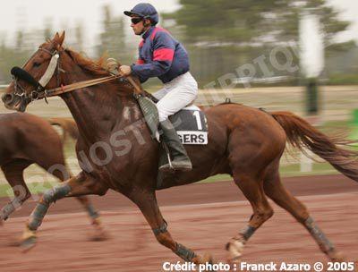 Divers chevaux de course sur l'hippodrome d'Eventard